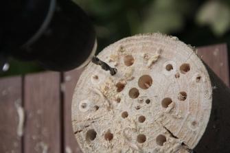 2/ Boor met verschillende diameters gaten in de houten tak.