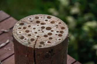 3/ Dan kunnen verschillende insecten er hun onderdak in vinden.
